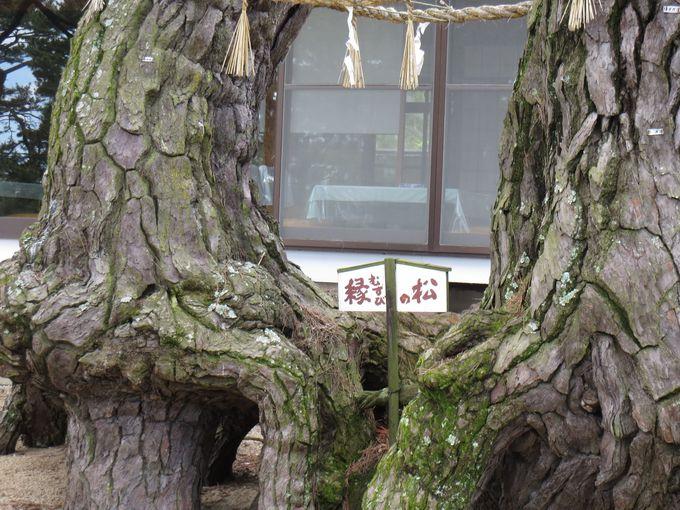 松林が美しい「津田の松原」は恋愛のパワースポット