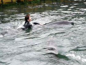 瀬戸内海・塩飽諸島「本島イルカ村」でイルカと泳いで幸せ探し!