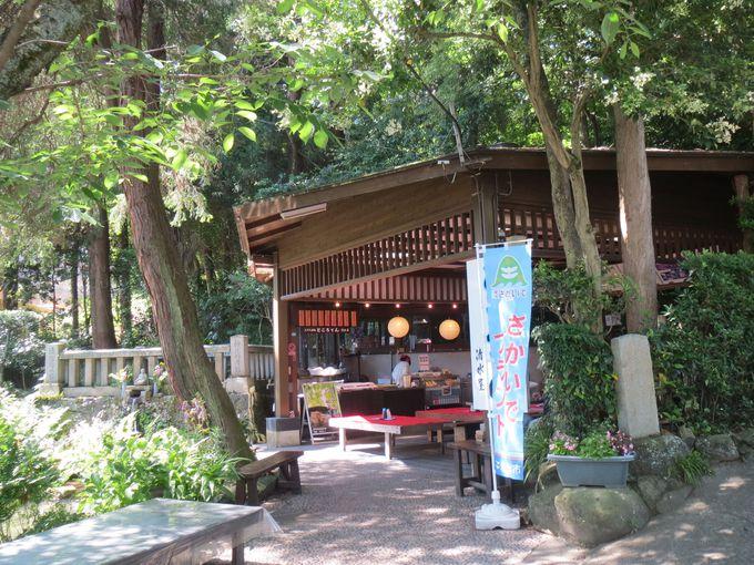 230年ところてんだけを作り続ける茶屋「清水屋」