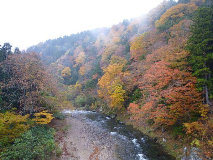 原生林の紅葉が見事な薬研渓流