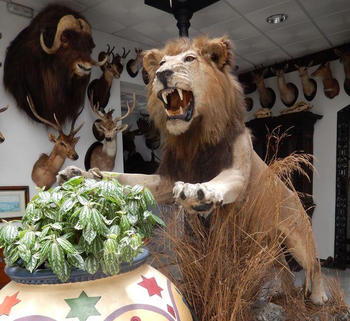 まるで生きてるみたい!動物の剥製が無数に並ぶ狩猟博物館(Museo de Caze)