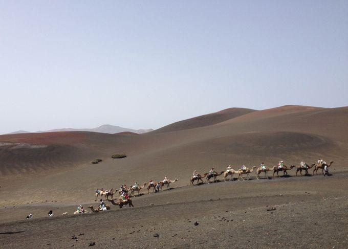 ラクダに乗ってプチ砂漠気分を楽しもう!