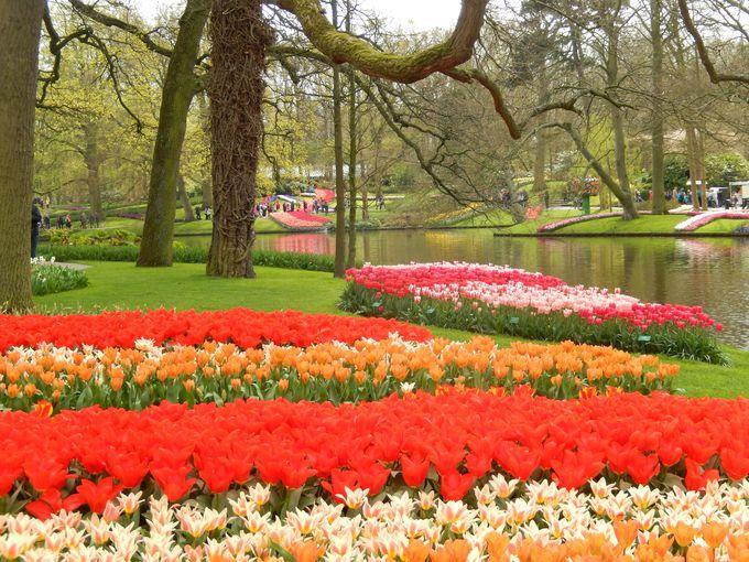 敷地32ヘクタール、広大な庭園に植えられた球根は700万個以上!