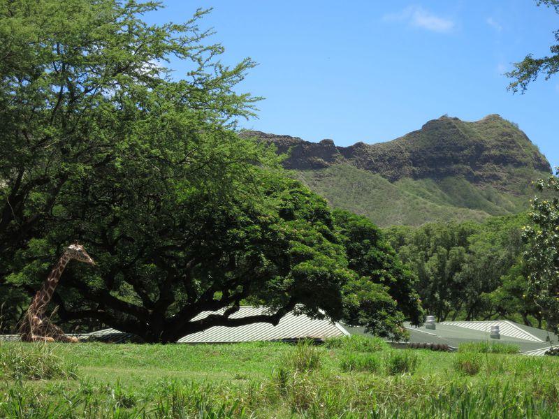 最もハワイを感じる場所!?自然豊かな「ホノルル動物園」の楽しみ方