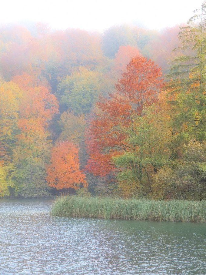 幻想的な霧の湖の紅葉も素晴らしい!