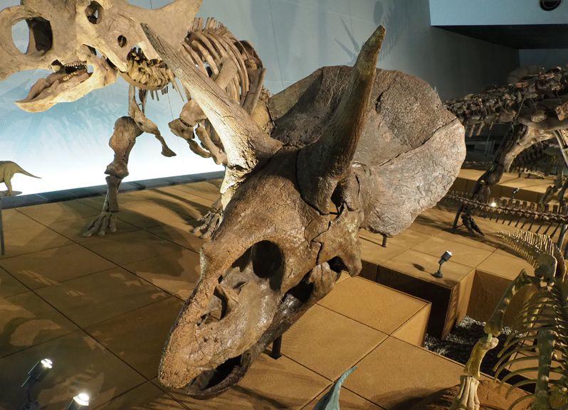 恐竜の世界ゾーンから生命の歴史ゾーンへ