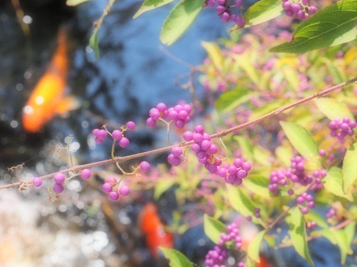 秋冬の花たち!