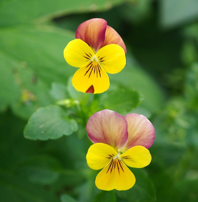 春の花たち!