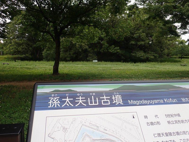 まずは仁徳天皇陵の周辺の古墳から!