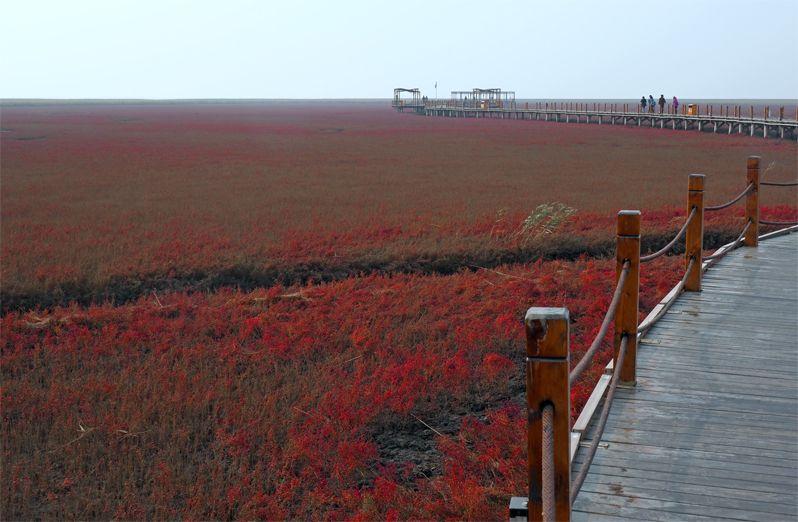 赤い奇跡の湿地帯レッドビーチ