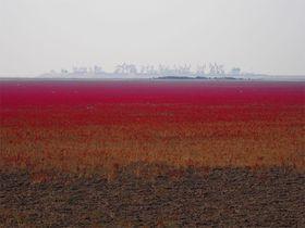 中国遼寧省の絶景「レッドビーチ」真っ赤な大地に野鳥と蟹も!