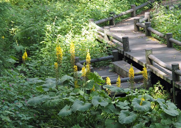 自然探勝園の花