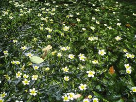 信州の穴場スポット「姫川源流自然探勝園」と「親海湿原」を歩こう!