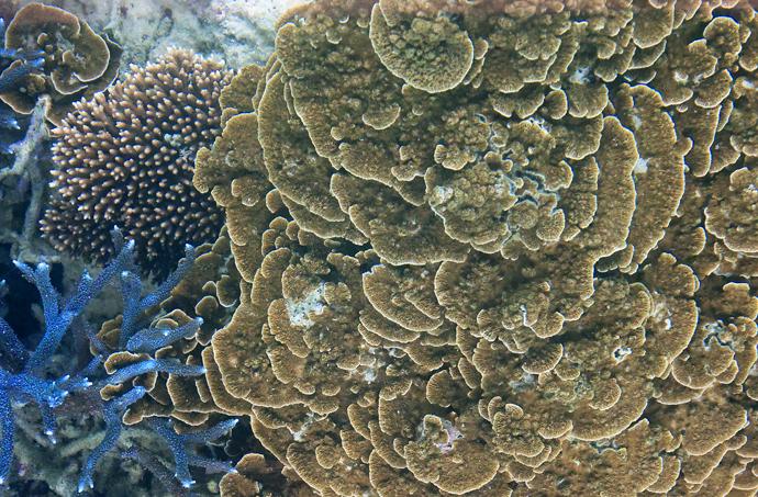 珊瑚の世界
