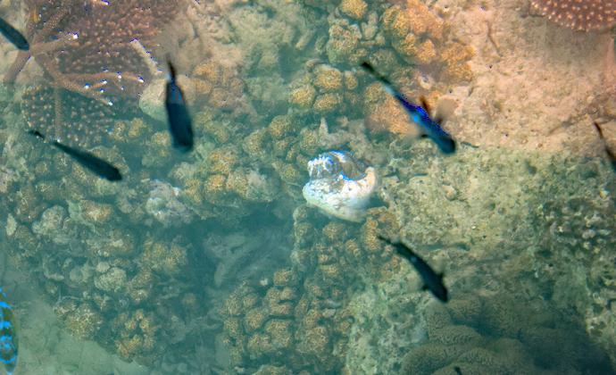 珊瑚礁に住む生き物たち