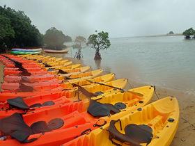 石垣島でマングローブカヌー体験を満喫!ジャングルを探勝しよう