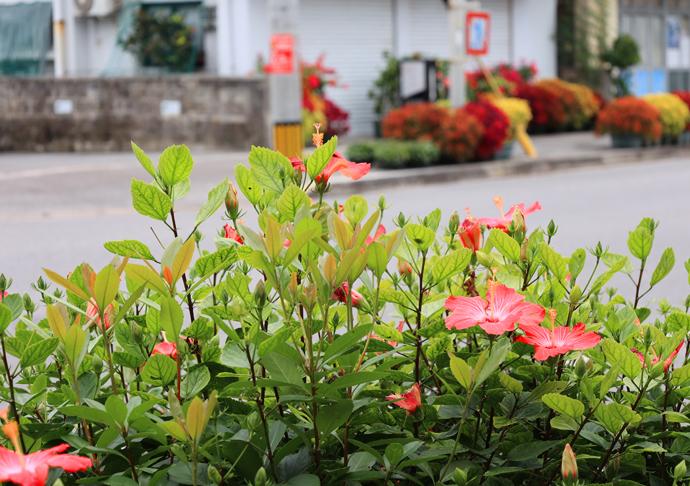 石垣島の名花たち