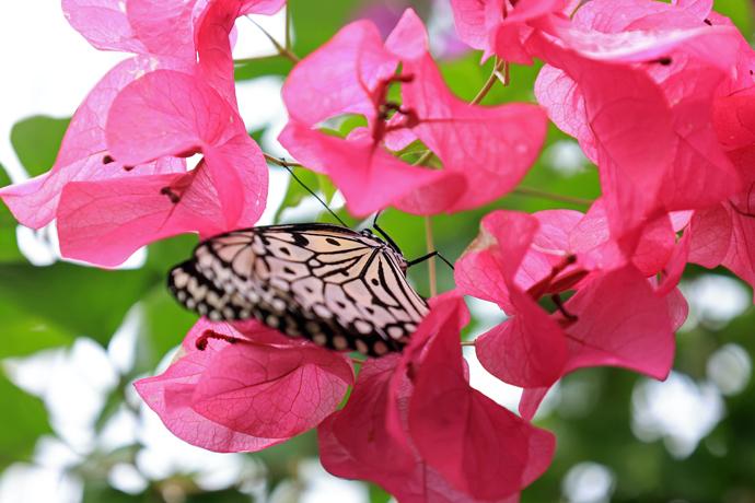 亜熱帯の空気が旅情を誘う!石垣島で野鳥・花・蝶などの自然探勝
