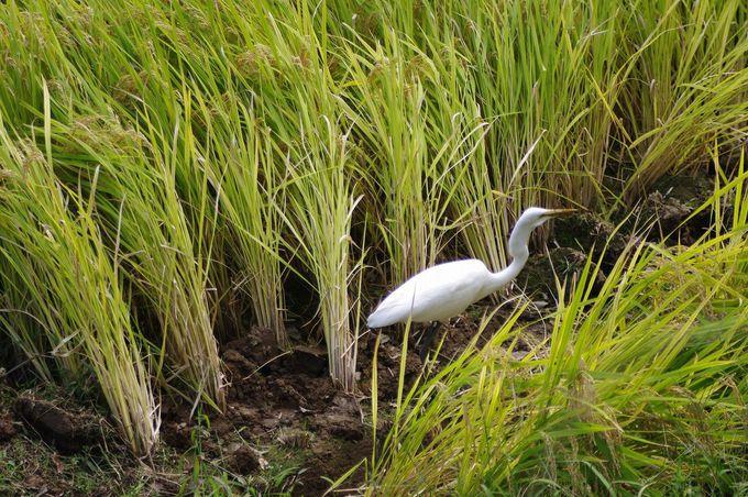 豊かな自然のもと、動植物も集まります