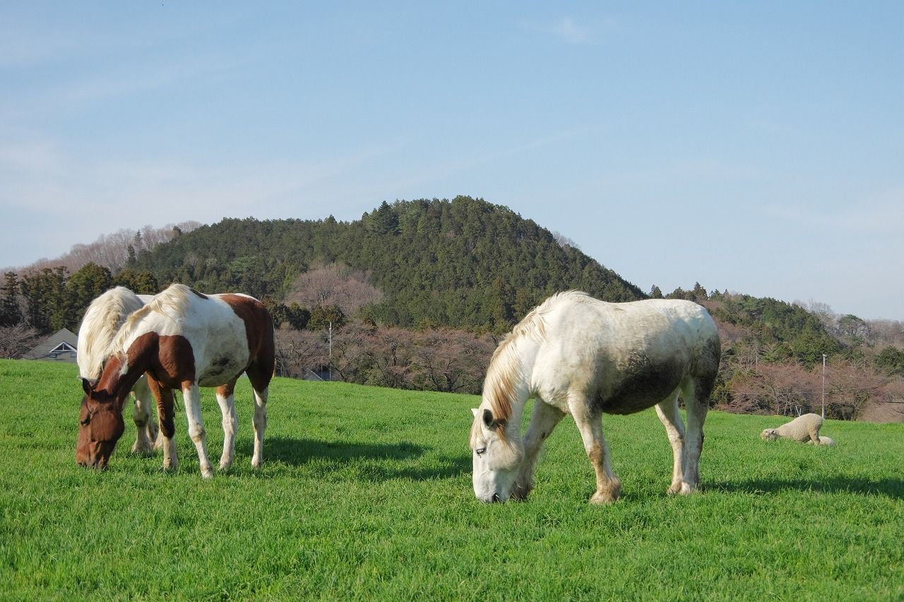 エバーグリーンの放牧地があります