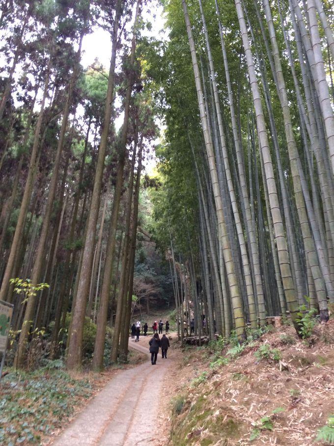 竹林や杉で覆われた神秘的な小道の向こうに・・
