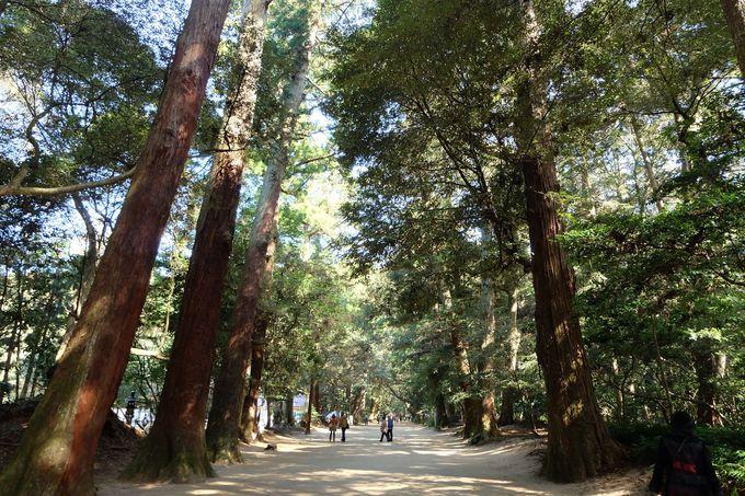 奥宮へ続く奥参道は癒し溢れる森林スポット!