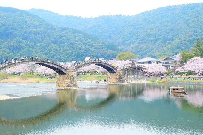 桜が咲き誇る春が最も美しい錦帯橋