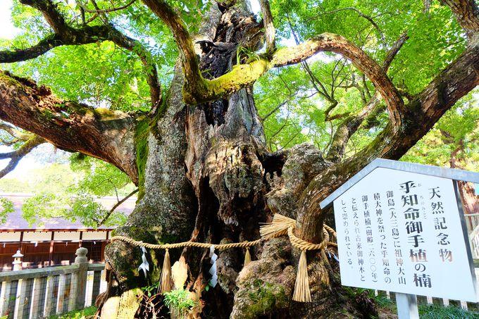 樹齢2600年の大楠!