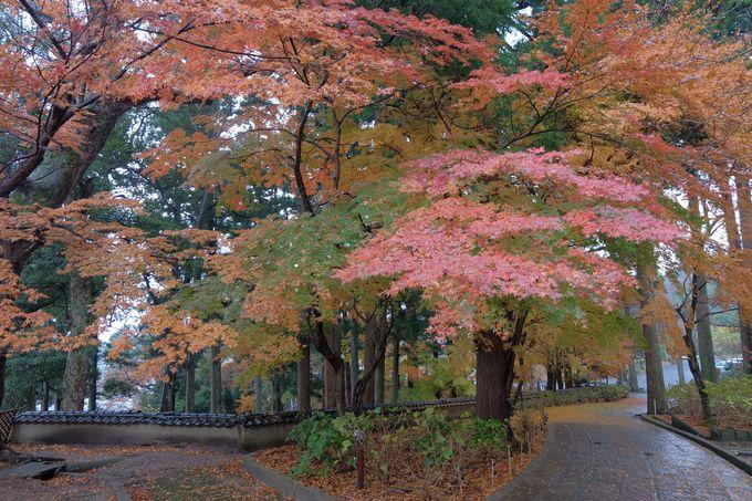 秋には見事な紅葉も