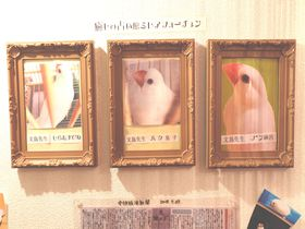 文鳥さん教えてチョー!名古屋・大須商店街「文鳥占い」はいかが?