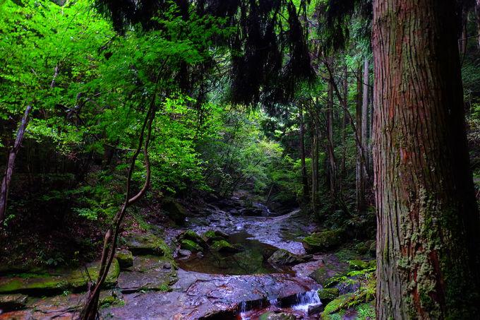 エメラルド色の滝壺と清涼な空間に包まれる龍鎮渓谷