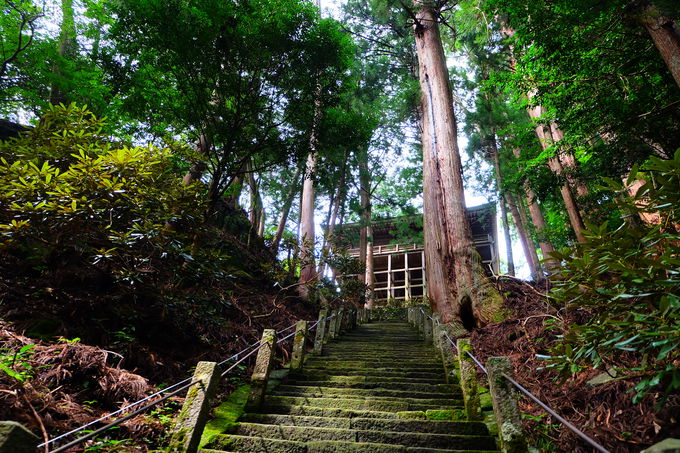 奥ノ院までは延々と続く修行なみの階段