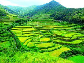 これぞ日本の原風景!眼下に広がる世界文化遺産の長崎「春日集落」