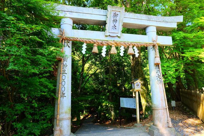 息をのむ神聖な聖域に佇む樹齢3000年の大楠!!