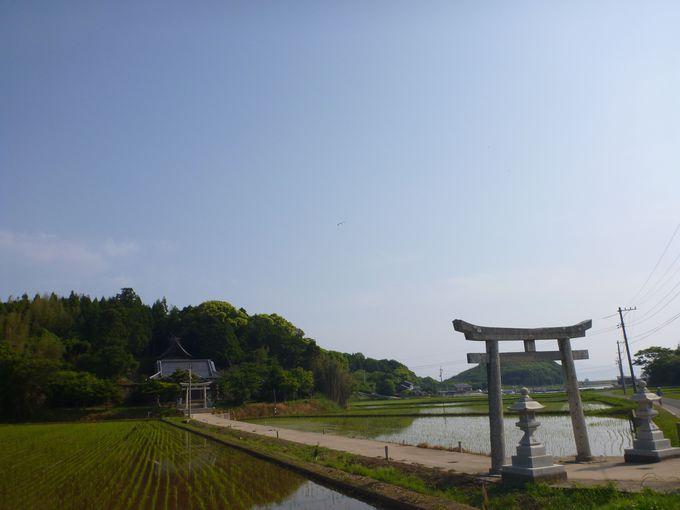 珍しい!田んぼの中にある神社「宇受賀命神社(海士町有形文化財) 」