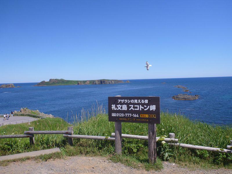 映画「北のカナリアたち」のロケ地にもなった礼文島の岬と花を巡る旅