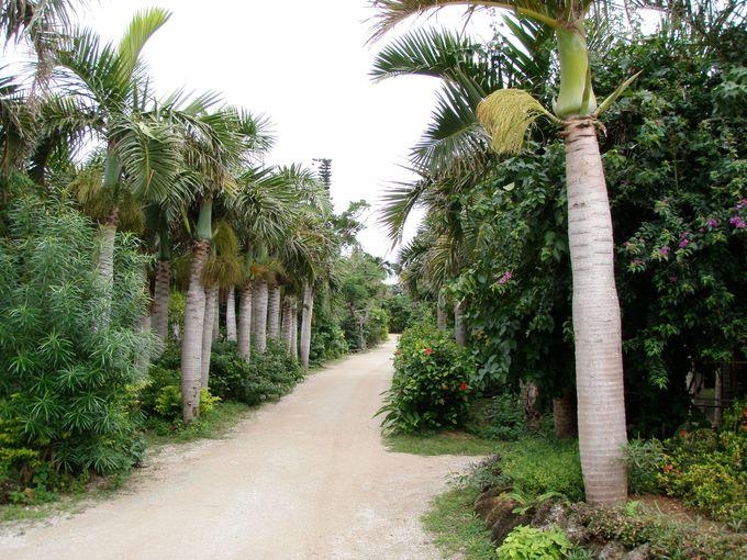 亜熱帯と言えば「ヤシ」。由布島にはヤシの種類も豊富です。
