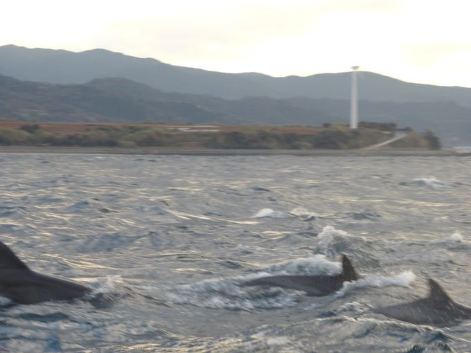 陸から10分足らずでイルカの群れに遭遇