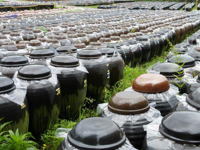 福山町が黒酢の醸造に適している理由