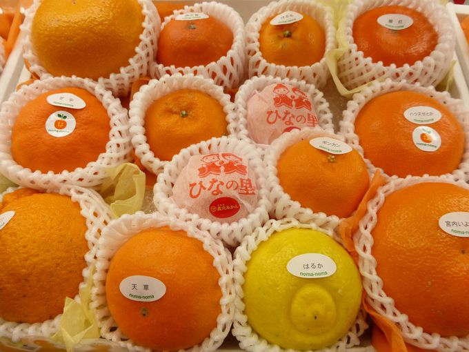 まずは生のままの柑橘類を探してみましょう