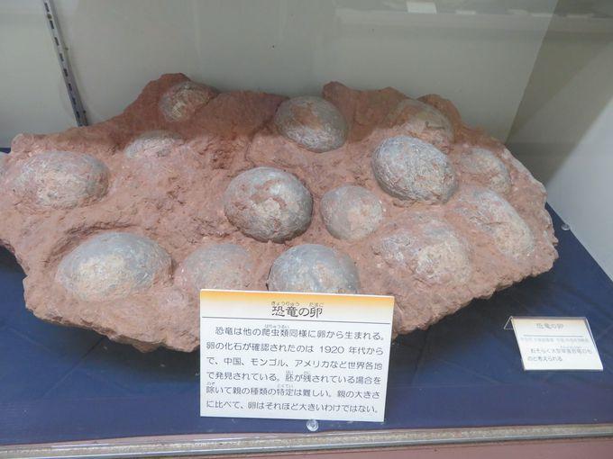 世界の化石も見逃せない!