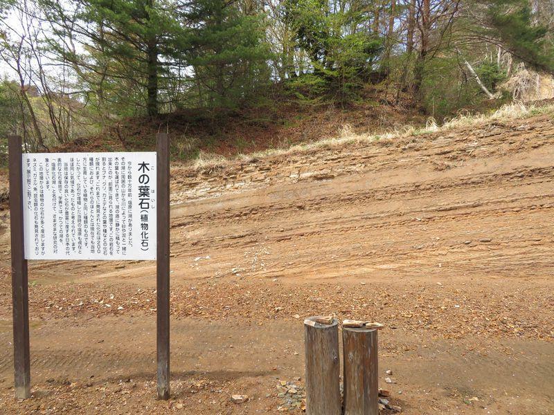 木の葉化石が目白押し!栃木「木の葉化石園」はお土産も見逃せない