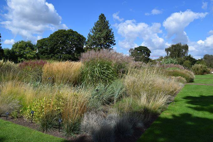 草の庭園で風を感じよう!