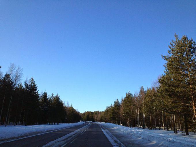 ストックホルムから1時間。美しい北欧の森へようこそ!