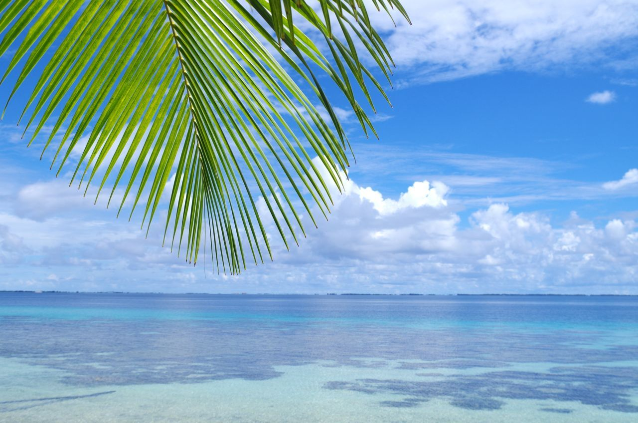 サンゴの島でシュノーケリング