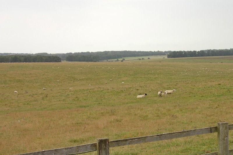 巨石文明を見守る羊たち