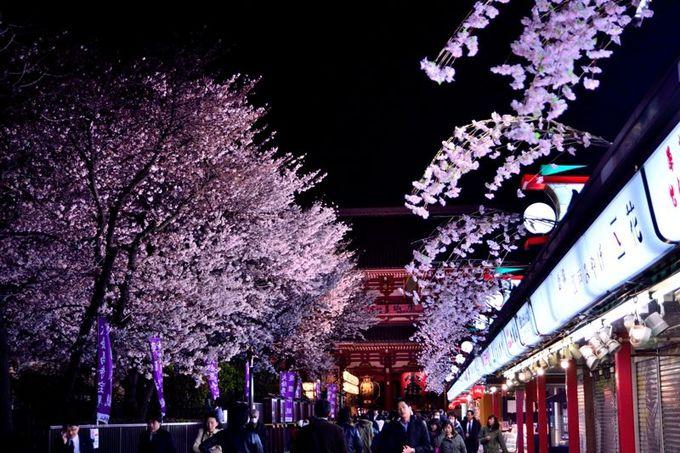 仲見世通りの桜も美しい
