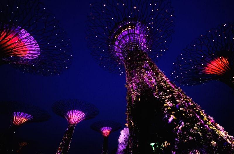 見上げれば、まるでシンガポールの「夜に咲く花」
