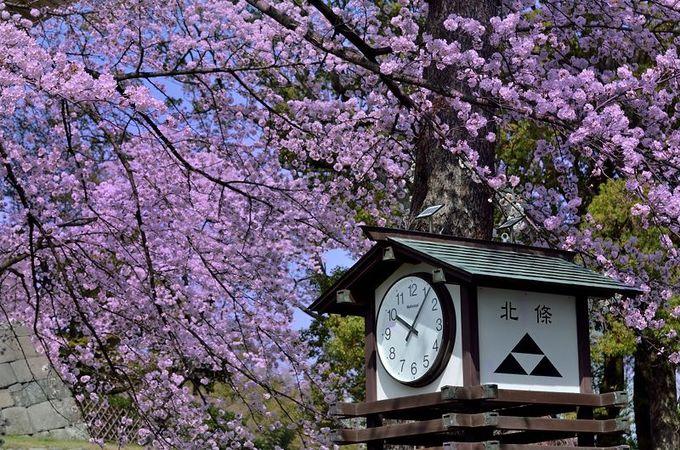 春の時を刻む時計に、北条氏の繁栄を偲ぶ