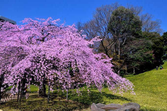 水戸徳川家の大名庭園「東京・小石川後楽園」